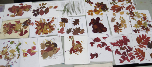 pressed leaves papermaking workshop2