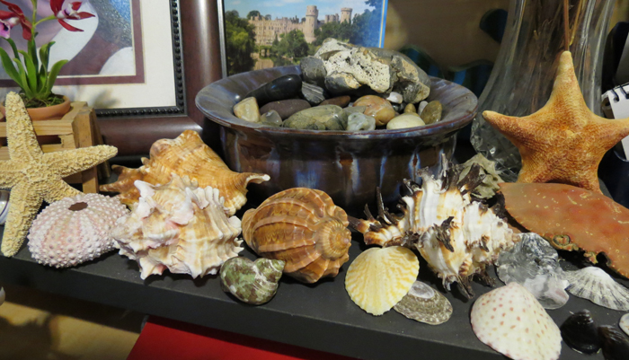 Treasures of the Sea on Julie's Desk