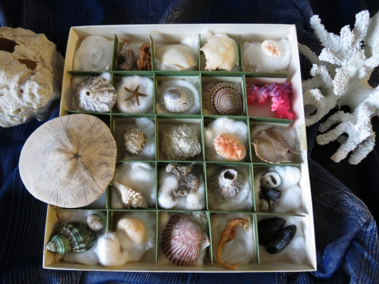 Julie's Shell Collection