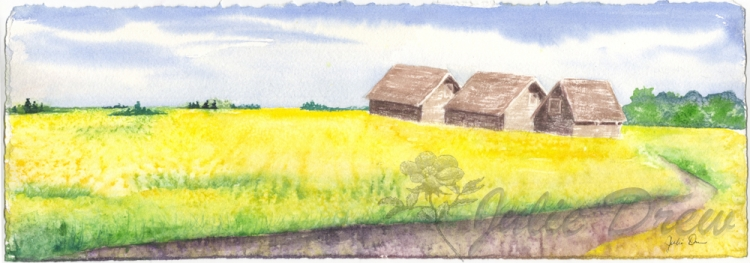 Canola Fields near Vegreville, AB